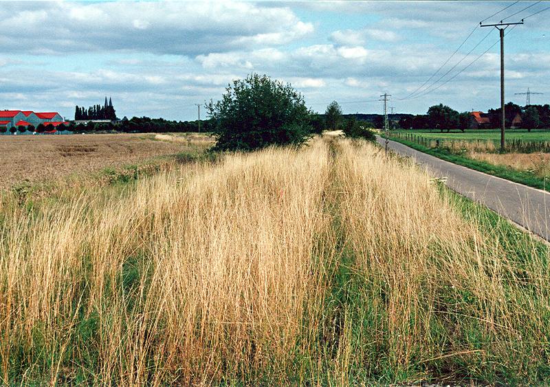 Xanten - Kleve im Düsterfeld - Zustand 2005